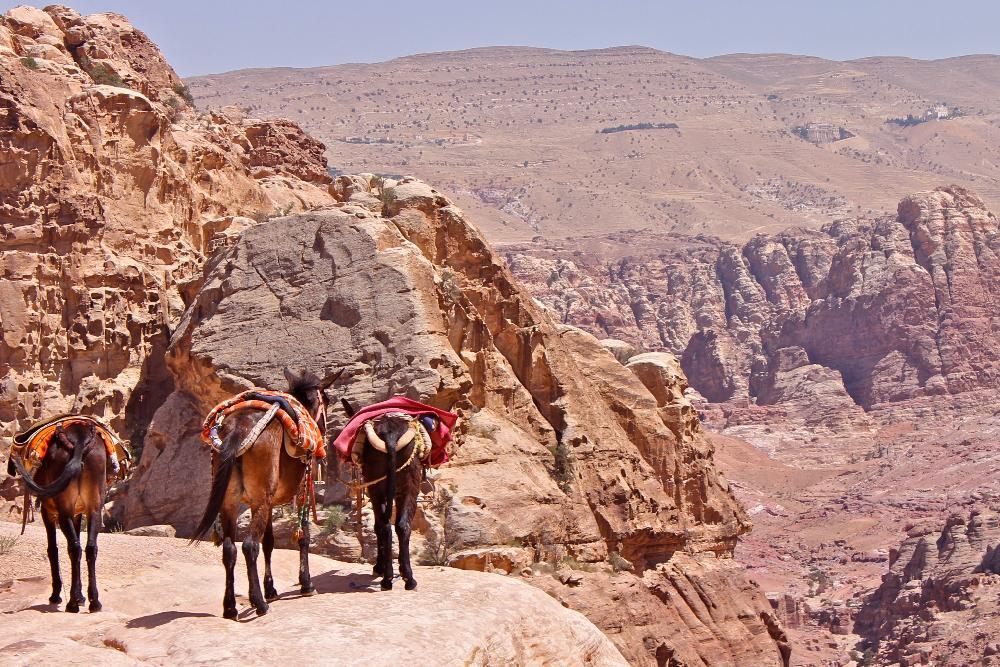 donkeys Petra, Jordan