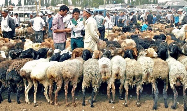 Mal Bazaar Kashgar animal market China