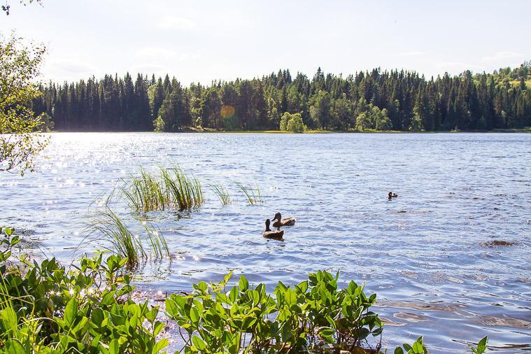 Lake Lian Summer Trondheim Norway