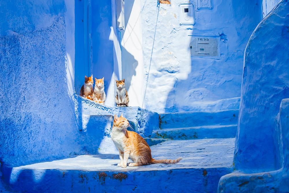 chefchaouen blue city streets houses morocco cats