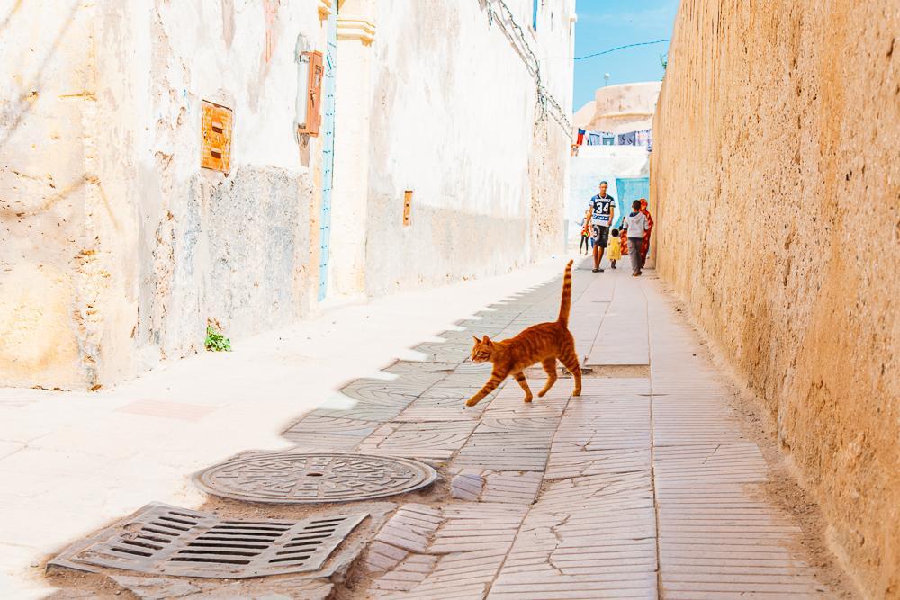 colorful streets essaouira morocco