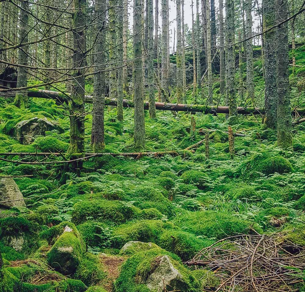 skredderdalen hike bergen fløyen norway