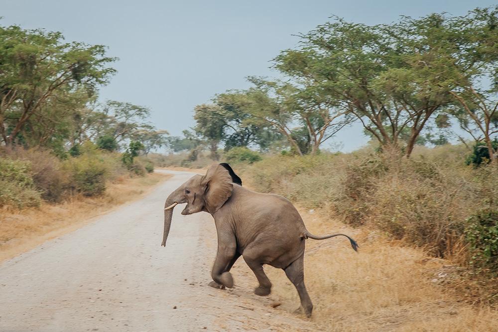 safari queen elizabeth national park uganda