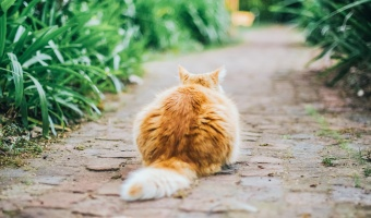 9 Reasons Norwegians Might Secretly All Be Cats