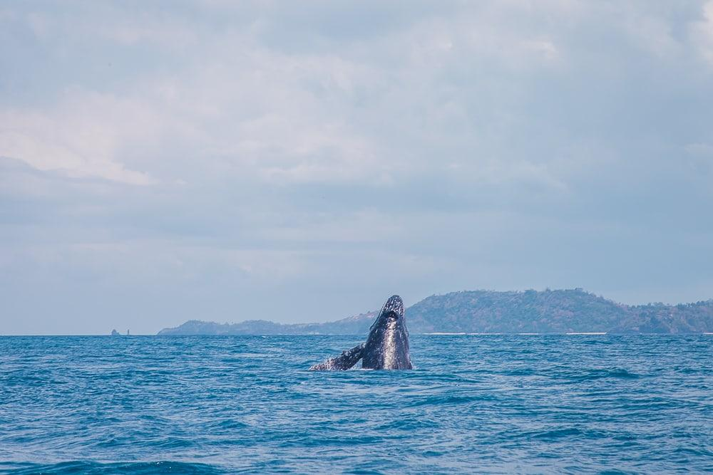 humpback whales moheli laka lodge comoros