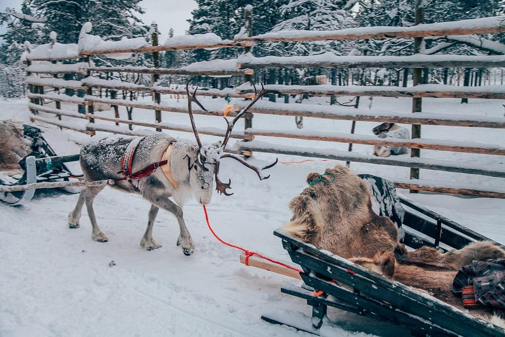 reindeer express northern lights village saariselka finland