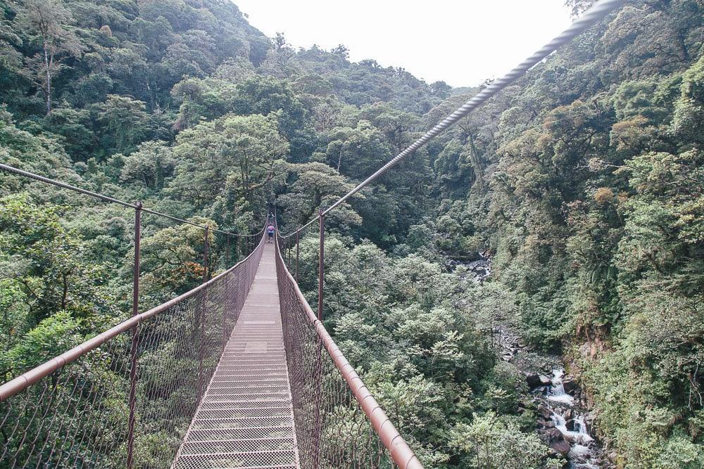 boquete tree trek cloud forest panama