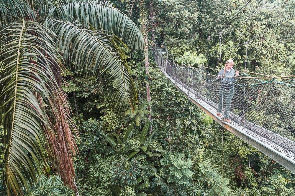 atta lodge canopy walk north rupununi rainforest guyana