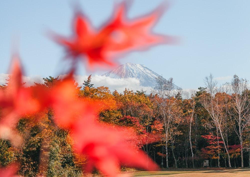 Saiko Yacho no Mori Park Mount Fuji Japan
