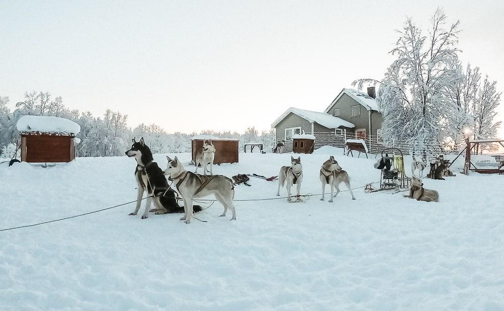 husky sledding in norway in december