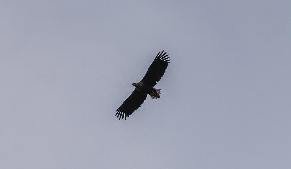 eagle sea safari lofoten explorer in winter