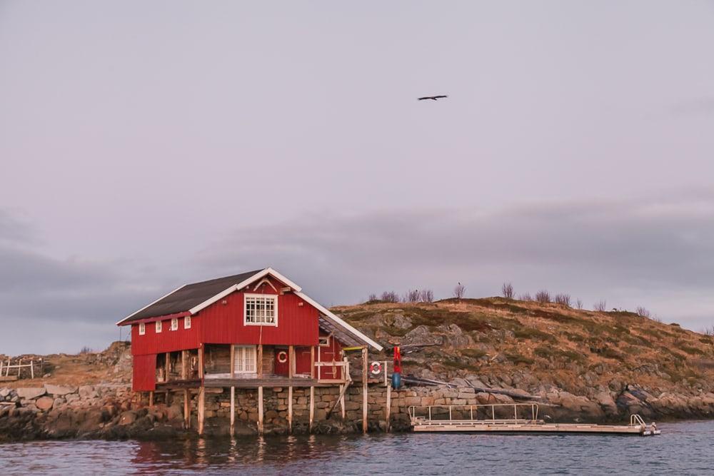 lofoten rib boat trips winter in norway