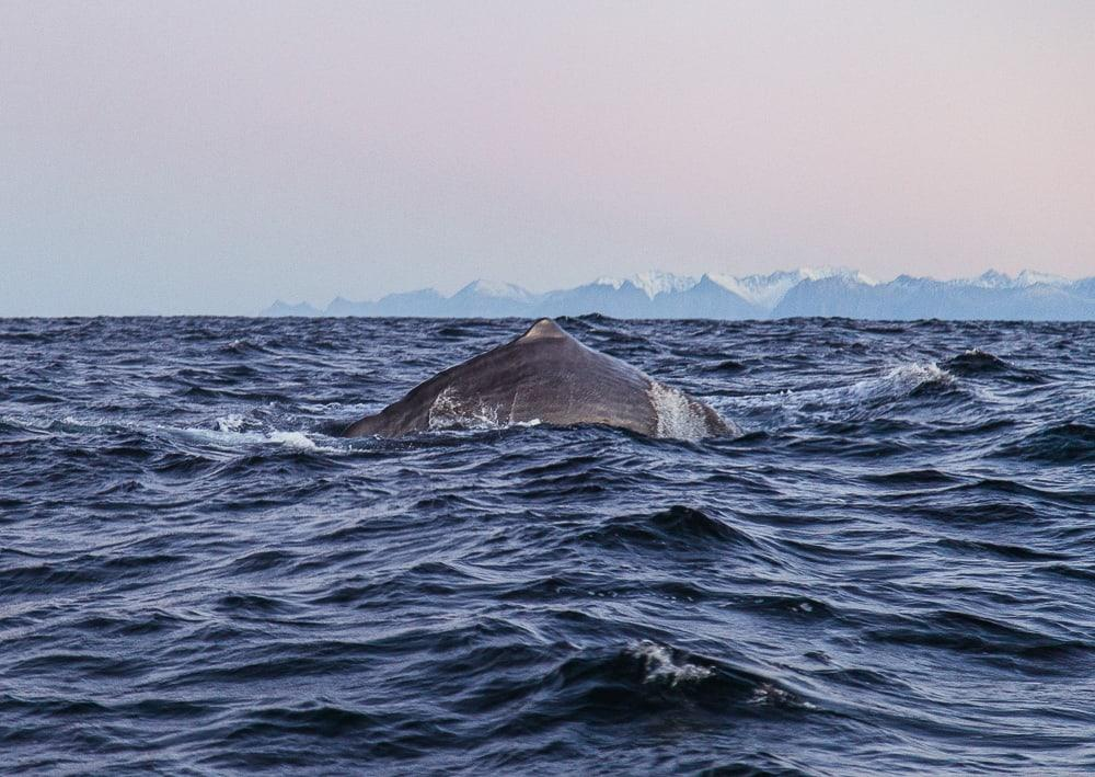 sea safari andenes whale watching norway polar night