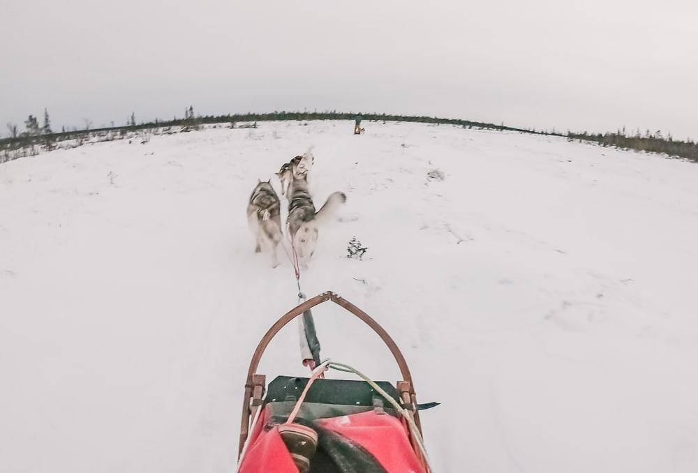 husky sledding in kiruna sweden airbnb