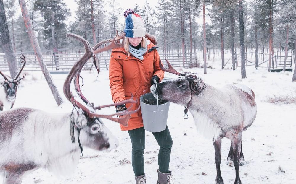 reindeer lodge nutti sami siida sweden