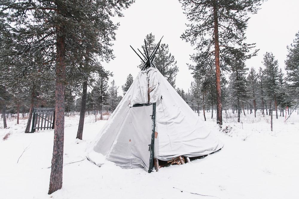 reindeer airbnb sweden
