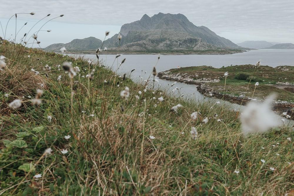 herøy, helgeland coast norway in summer