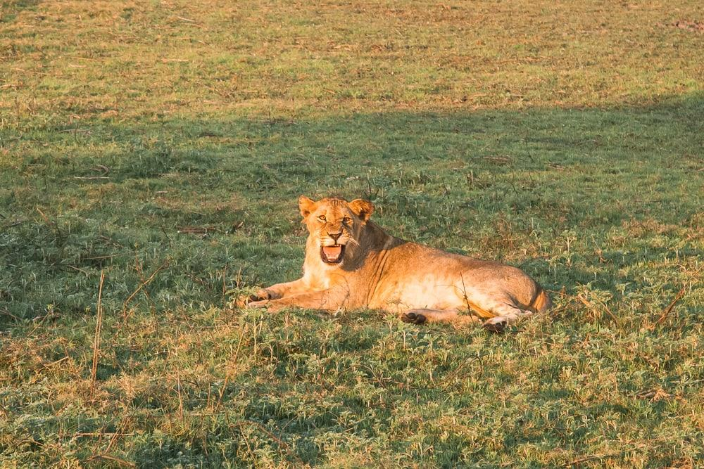 gorongosa national park safari lions mozambique