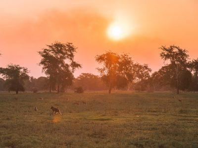 gorongosa national park safari mozambique