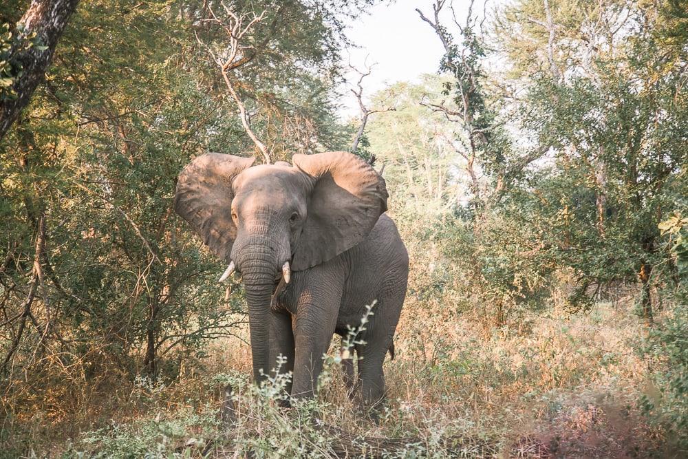 gorongosa national park safari elephants mozambique