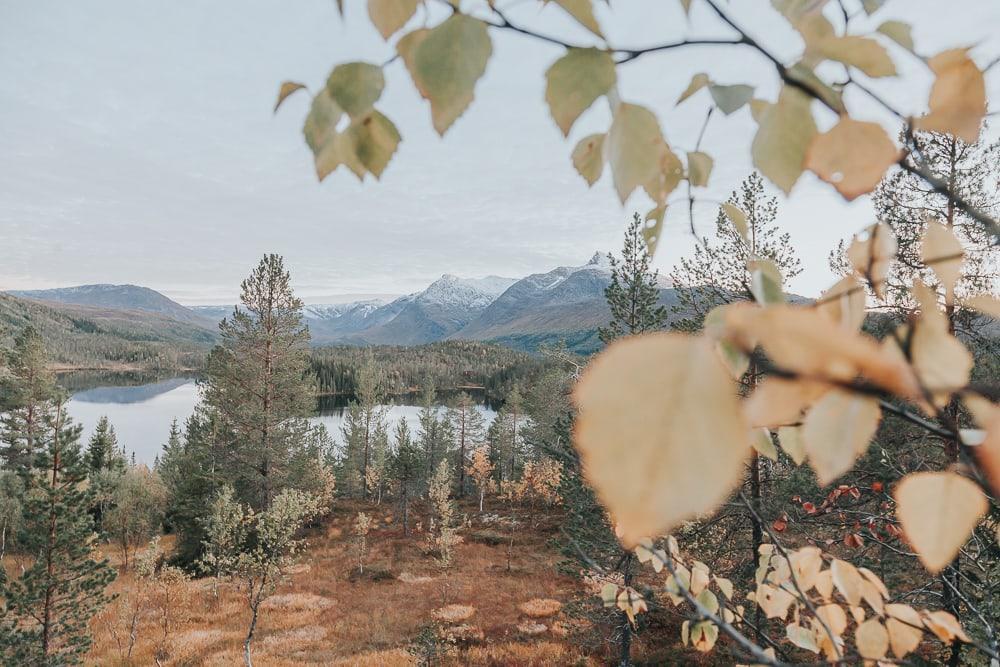 fall colors in Helgeland, Norway