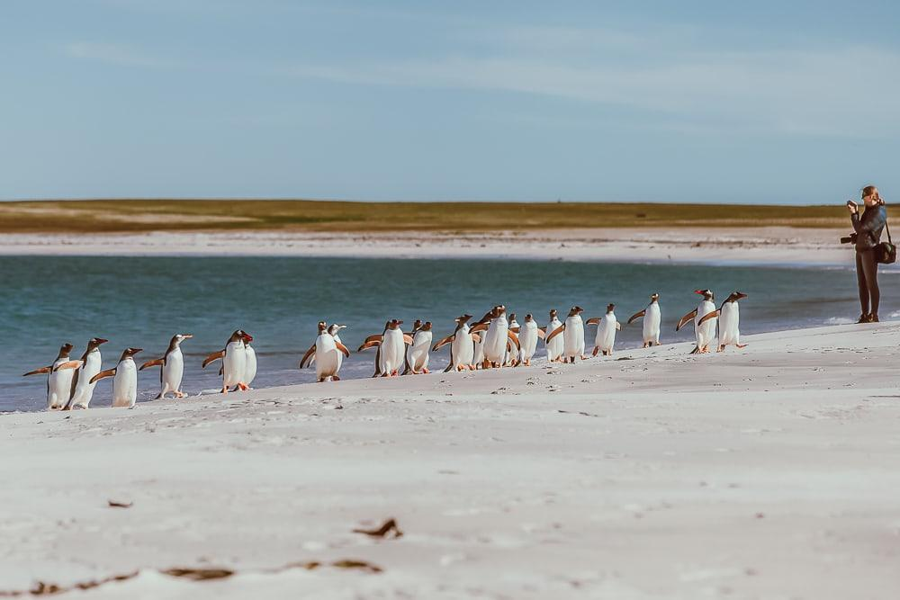 bleaker island falklands