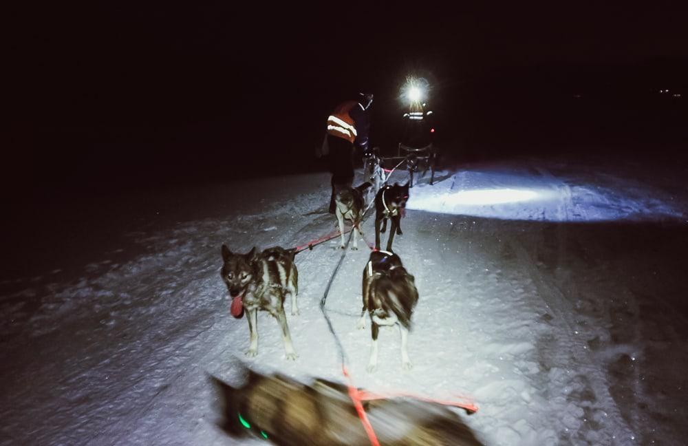 husky sledding svalbard