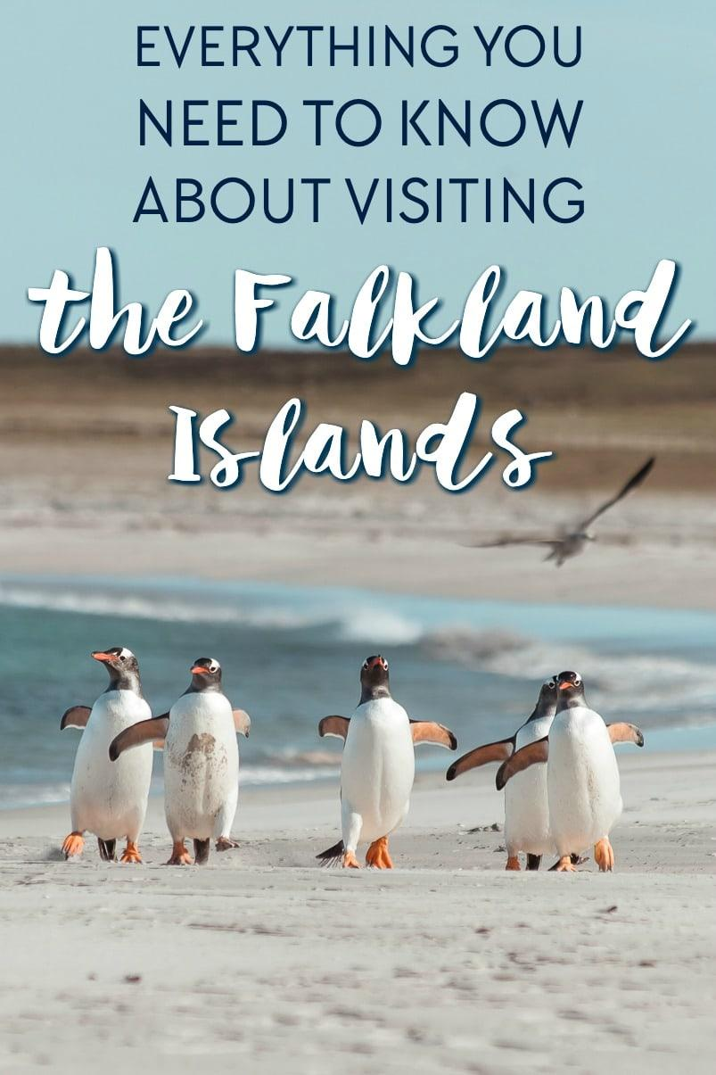 Falkland Island Travel Guide: everything you need to know about planning a trip to the Falklands