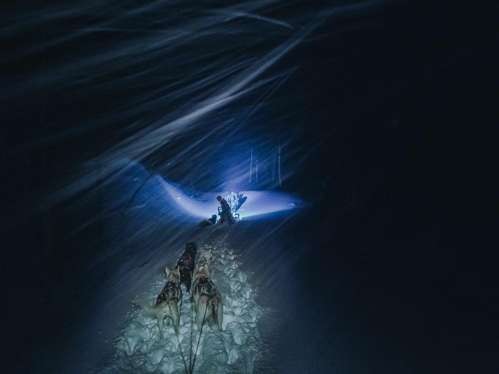 husky sledding aaslid polar helgeland susendal norway