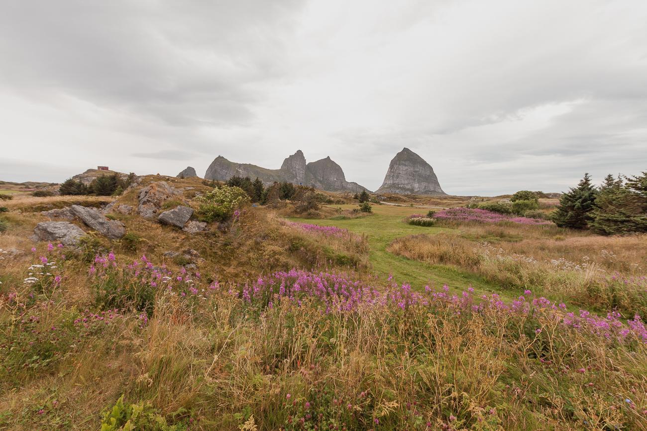 summer on husøya, traena, norway
